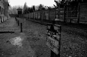 Auschwitz, 2008